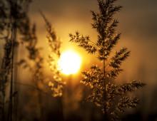 Solnedgang på Havfrua