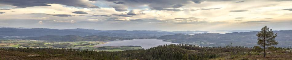Tillerknoppen-panorama