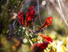 Naturbilder oktober